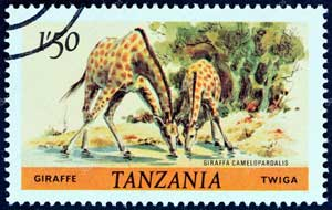 A stamp of giraffes from Tanzania